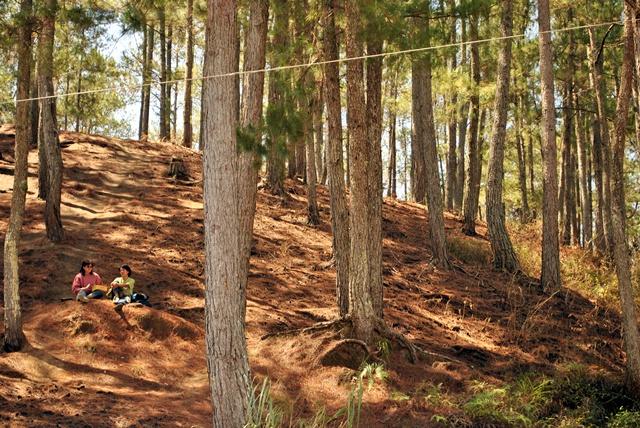 Sagada Woods
